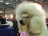 dogshow_max700px-06
